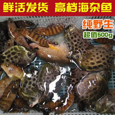 湛江海鲜 鲜活野生海鱼 天然海杂鱼 新鲜 黄翅鱼 石斑鱼 黄花鱼