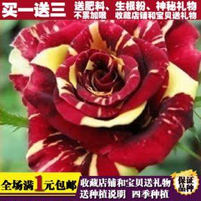 花语传情花卉旗舰店