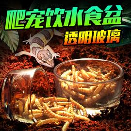 爬虫玻璃食盆水盆爬宠陆龟蜥蜴蝎子玉米蛇守宫喂食台小型小号透明