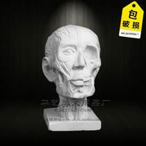 Картина Юэ изобразительного искусства штукатурка фигура голова Анатомия мышцы череп эскиз штукатурка как художественная комната эскиз натюрморт оборудование