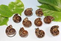 High-quality Spot Color screw jewelry Jade spiral transfer spiral Chrysanthemum wrapping pendant mineral crystal fossils specimens rough 1