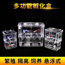 Anchovies container peacock fish spawning room glass tank fish tank incubator separator new ovarian seedling mother spawning