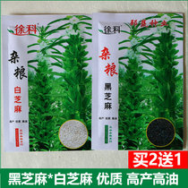 Black sesame seeds quality self-produced white sesame seeds yielding oil resistant black sesame seeds raw farm-grown larvae