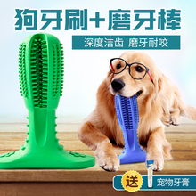 Big dog, puppy, puppy, puppy, puppy, golden hair, toothbrush, artifact, pet toys