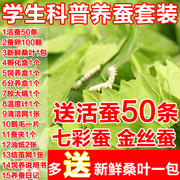 Science students set fresh mulberry leaves silkworms silkworm eggs in sericulture WIRE FREE SHIPPING