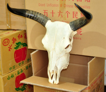 Natural yak skull craft gift decoration interior decoration Art cow head ornament real cow head sheep skull