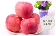 Special offer every day Shaanxi white water organic red apple Fuji 85# 12 large fresh crisp and sweet fruit