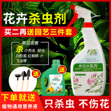 Flower insecticide for plant household scale insects red spider