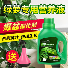 Plant Leaf Hair, Special Nutrition Solution for Green Luo, Hydroponic Cephalotaxy Fertilizer, Indoor Potted Plant Liquid Fertilizer