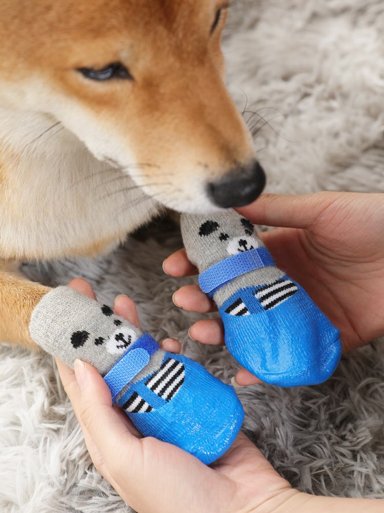Bao chân thú cưng